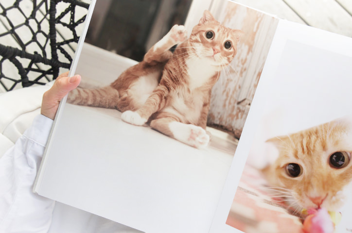 Someone sat with an open photo book featuring images of cats.