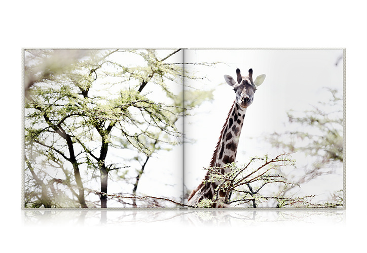 Square travel photo book laying open with a photo of a giraffe among trees.